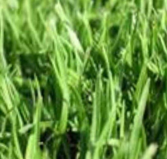 """תמונה של דשא קוקויו (מחיר למ""""ר)"""